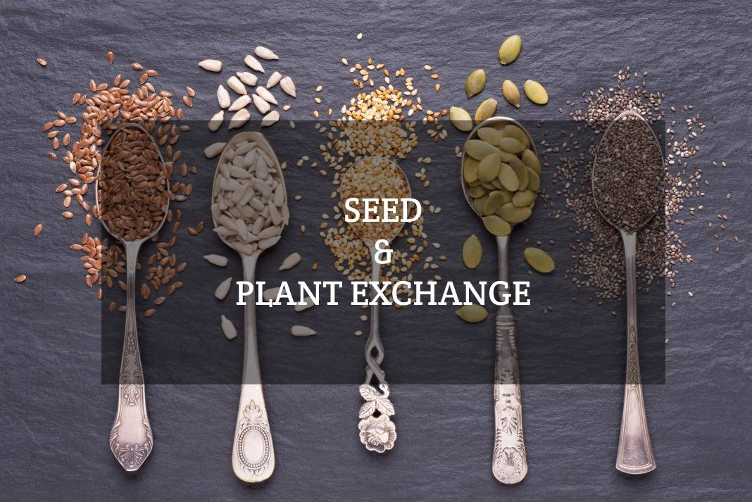 Seed Exchange Urban Bageecha Ludhiana